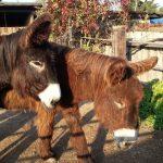 Unsere Esel genießen die letzten Sonnenstrahlen