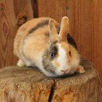Kaninchen hoch oben!