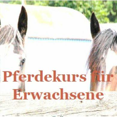 Pferdekurs für Erwachsene